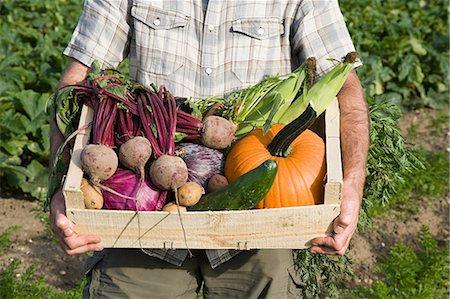 Man holding wooden create of freshly farmed vegetables Stock Photo - Premium Royalty-Free, Code: 614-03684532
