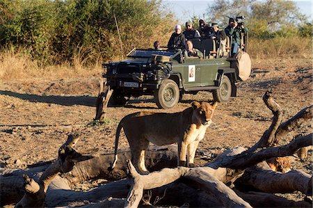 predator - Tourists on safari view wildlife Stock Photo - Premium Royalty-Free, Code: 614-03784214