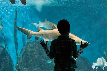 silhouettes - Boy watching sharks in aquarium Stock Photo - Premium Royalty-Free, Code: 614-03903653