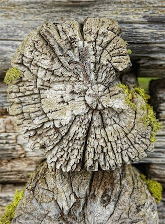 Tree trunk, cross section Stock Photo - Premium Royalty-Free, Code: 614-03981555