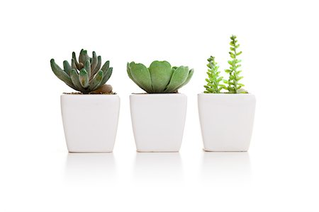 potted plant - Three varieties of mini cactus in pots Stock Photo - Premium Royalty-Free, Code: 618-05450855
