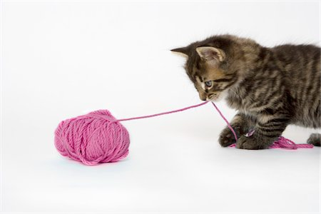 A young tabby kitten playing with a ball of wool. Stock Photo - Premium Royalty-Free, Code: 618-05605134