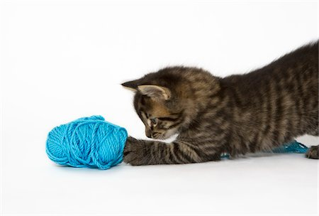 A young Tabby kitten playing with wool. Stock Photo - Premium Royalty-Free, Code: 618-05605135