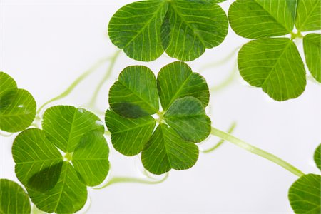 repeating - Group of Lucky Clovers Stock Photo - Premium Royalty-Free, Code: 618-05605379