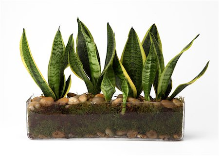 dirt - Plants in glass container Stock Photo - Premium Royalty-Free, Code: 618-05761940
