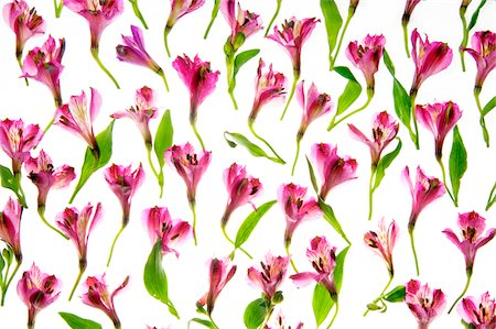 spring background - flowers Stock Photo - Premium Royalty-Free, Code: 618-06052277