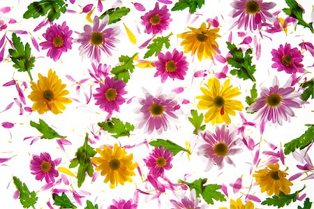 decoration pattern - Flowers Stock Photo - Premium Royalty-Free, Code: 618-06052270
