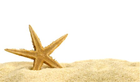 stars on white background - Star fish in the sand Stock Photo - Premium Royalty-Free, Code: 618-06119036