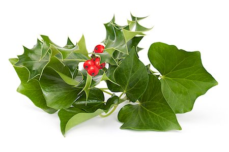 Holly and Ivy Stock Photo - Premium Royalty-Free, Code: 618-06405261