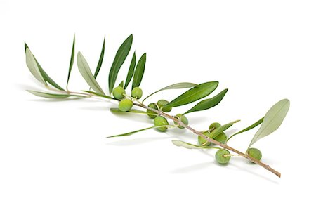 olive twig with green olives Stock Photo - Premium Royalty-Free, Code: 618-06436783