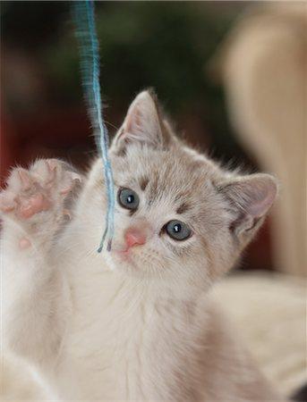 Kitten plays with wool yarn Stock Photo - Premium Royalty-Free, Code: 618-06818365