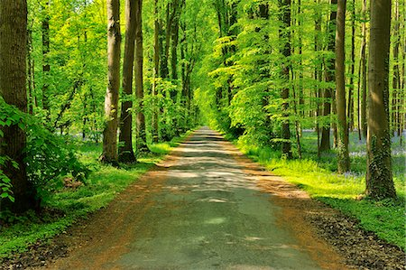 Forest Road Stock Photo - Premium Royalty-Free, Code: 618-07073051