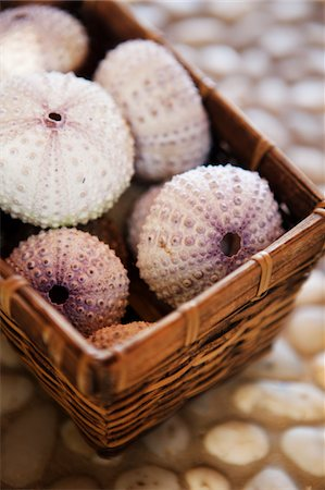 Seashells in a basket Stock Photo - Premium Royalty-Free, Code: 618-07397462