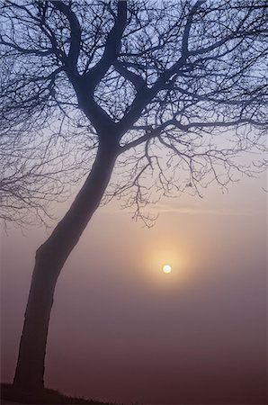 Bare tree silhouette in the twillight Stock Photo - Premium Royalty-Free, Code: 618-07457984
