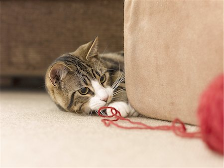 domestic - Cat Playing. Stock Photo - Premium Royalty-Free, Code: 618-07595984
