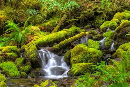 Small moss laden Stream Sol Duc Rainforest Stock Photo - Premium Royalty-Free, Code: 618-08063702