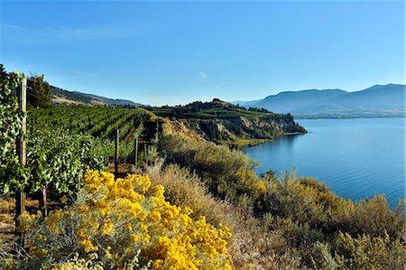 Naramata Bench Penticton Okanagan Valley Stock Photo - Premium Royalty-Free, Code: 618-08063723