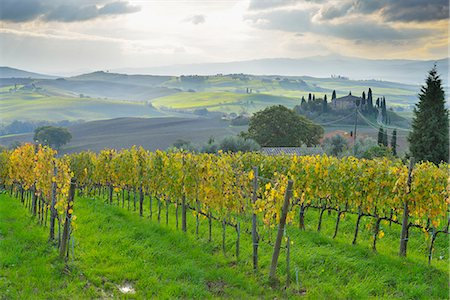 Tuscany Countryside with Farmhouse and Vineyard Stock Photo - Premium Royalty-Free, Code: 618-08102350