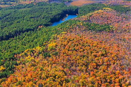 forest - Aerial view of forest in autumn Stock Photo - Premium Royalty-Free, Code: 618-08174191
