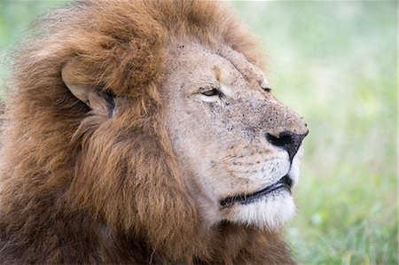 Wildlife Stock Photo - Premium Royalty-Free, Code: 618-08184480