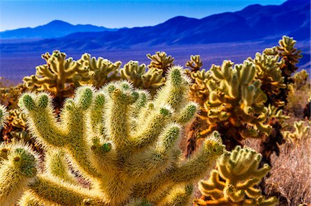 spike - Joshua Tree National Park, California Stock Photo - Premium Royalty-Free, Code: 618-08389154