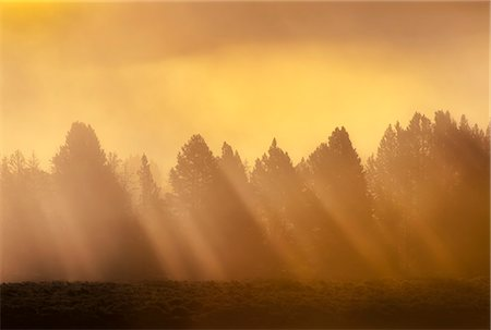 AM sunrise through fog in Hayden Valley yellowstone Stock Photo - Premium Royalty-Free, Code: 618-08527855