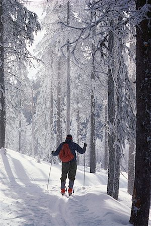 Cross-country skier in woods Stock Photo - Premium Royalty-Free, Code: 618-01414714