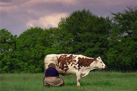 Woman milking cow out in field Stock Photo - Premium Royalty-Free, Code: 618-01419668