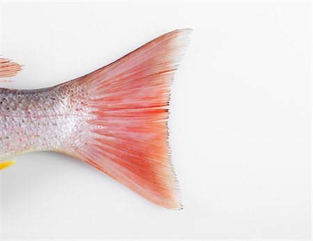 Red Snapper Tail Stock Photo - Premium Royalty-Free, Code: 618-03608799