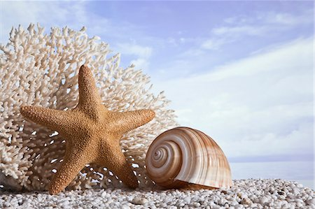 sea star - Still life on beach Stock Photo - Premium Royalty-Free, Code: 618-03608908