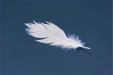 feather  close-up - White feather floating in harbor Stock Photo - Premium Royalty-Free, Code: 618-03611613