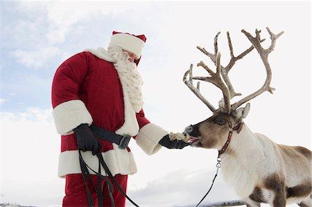 reindeer in snow - Santa Claus feeding his reindeer Stock Photo - Premium Royalty-Free, Code: 618-03612595