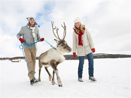 reindeer in snow - A young couple taking a baby reindeer for walk Stock Photo - Premium Royalty-Free, Code: 618-03612611