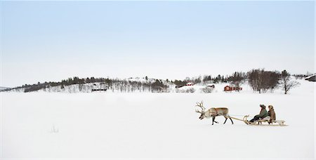 reindeer in snow - A reindeer pulling a senior couple on a sleigh Stock Photo - Premium Royalty-Free, Code: 618-03612677