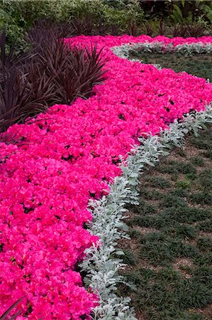 Planting of Azeleas Curve pattern Callaway Garden Stock Photo - Premium Royalty-Free, Code: 618-03632766
