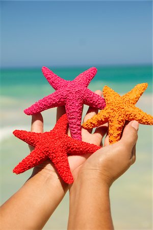 sea star - Hands full of starfish. Stock Photo - Premium Royalty-Free, Code: 618-03757085