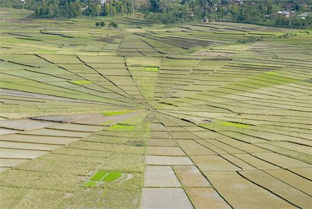 flores - Indonesia, Flores, near Ruteng, cobweb-shaped ricefields Stock Photo - Premium Royalty-Free, Code: 610-01577374