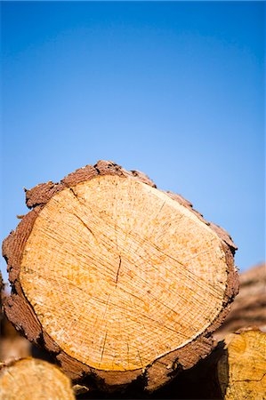 Timber, close-up. Stock Photo - Premium Royalty-Free, Code: 6102-03750530