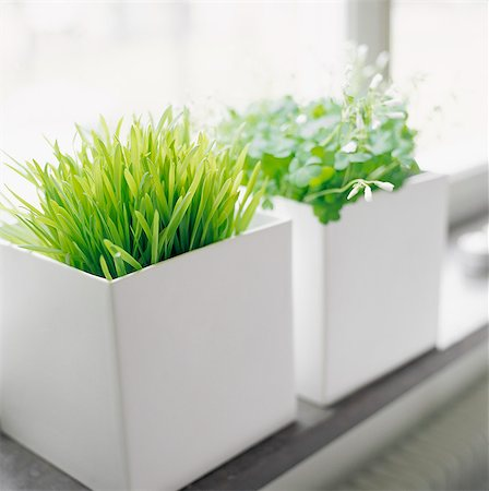 potted plant - Small pots in white pots on window sill Stock Photo - Premium Royalty-Free, Code: 6102-03859068