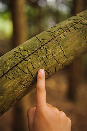 A finger pointing at a treetrunk. Stock Photo - Premium Royalty-Free, Code: 6102-05655544