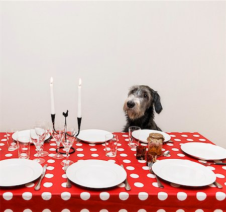 setting kitchen table - Dog sitting at table Stock Photo - Premium Royalty-Free, Code: 6102-06374506