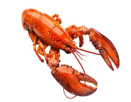 Lobster on white background Stock Photo - Premium Royalty-Free, Code: 6102-06336514