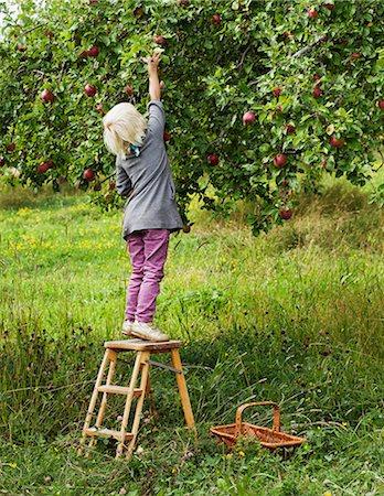 single fruits tree - Blond girl picking apples Stock Photo - Premium Royalty-Free, Code: 6102-06336683