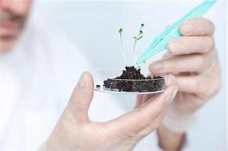 Scientist lifting seedling with tweezers Stock Photo - Premium Royalty-Free, Code: 6102-06470869