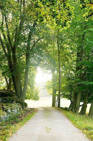 forward - Treelined path Stock Photo - Premium Royalty-Free, Code: 6102-06470991