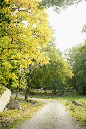 forward - Path in park Stock Photo - Premium Royalty-Free, Code: 6102-06470992