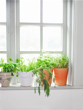 potted plant - Herbs on window sill Stock Photo - Premium Royalty-Free, Code: 6102-06777597