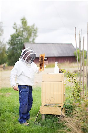 Bee-keeper at work Stock Photo - Premium Royalty-Free, Code: 6102-07158352