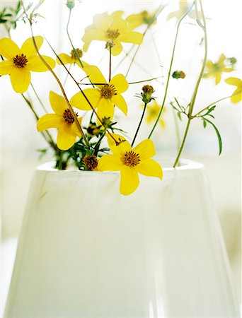 Close-up of yellow flowers in vase Stock Photo - Premium Royalty-Free, Code: 6102-07455720