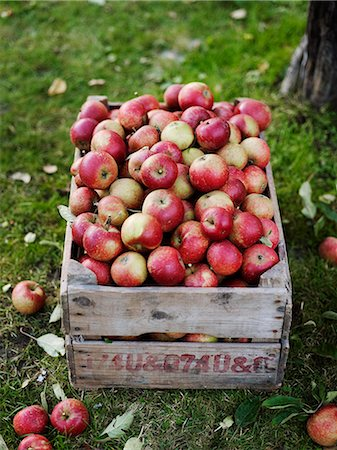 Apples in wooden box, Varmdo, Uppland, Sweden Stock Photo - Premium Royalty-Free, Code: 6102-07521619
